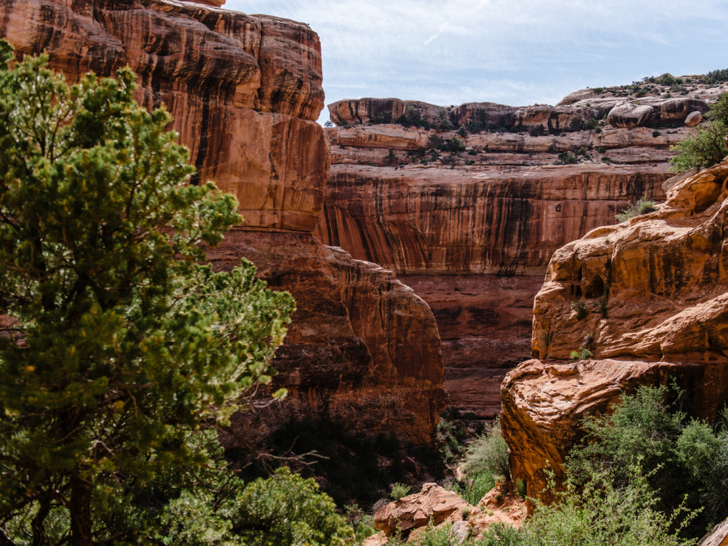 Grand Canyon: Florida Woman Dies After Fall | Time
