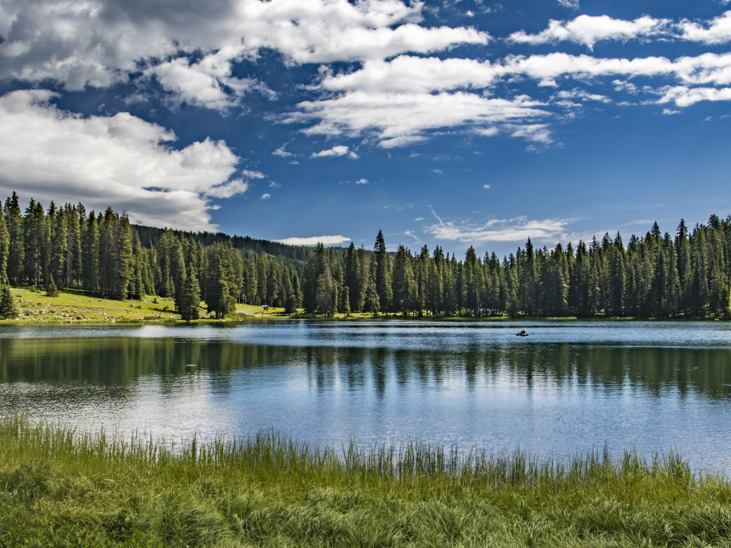 Grand Mesa National Forest, Colorado.