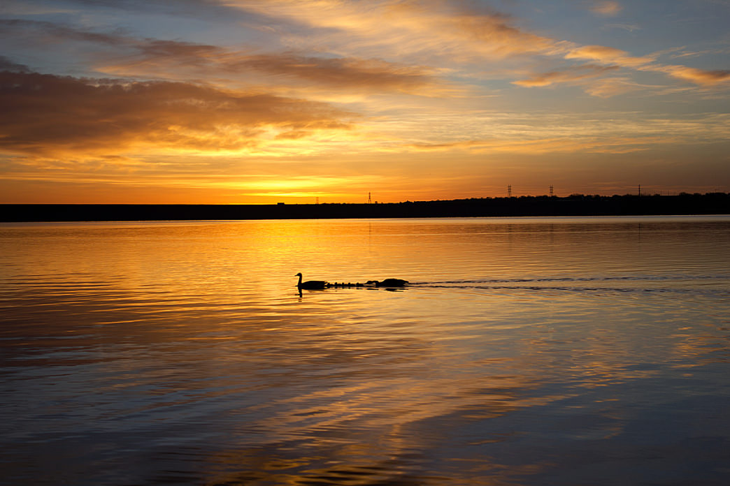Ducks cruise across the water on the peaceful Chatfield Reservoir.