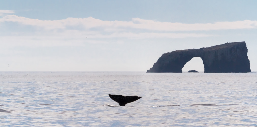 Whales are just some of the wildlife you'll spot on a trip to the Channel Islands National Park.