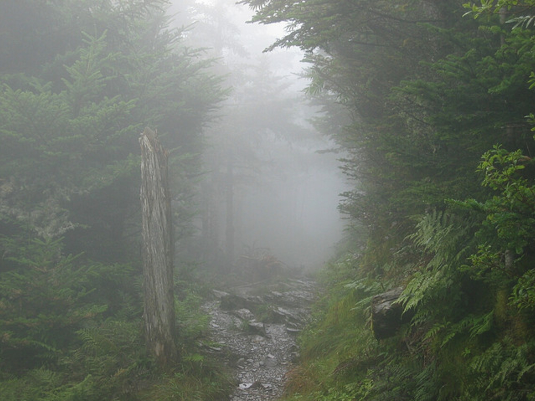 Mt Leconte Hiking