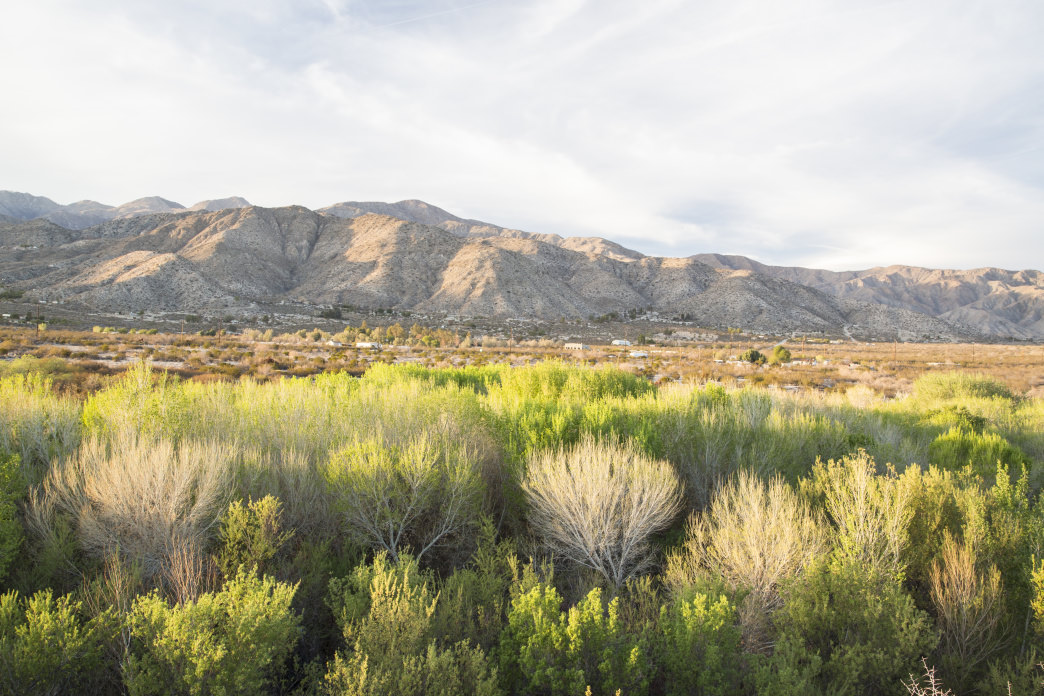The Big Morongo Canyon Preserve is another desert oasis worth visiting.