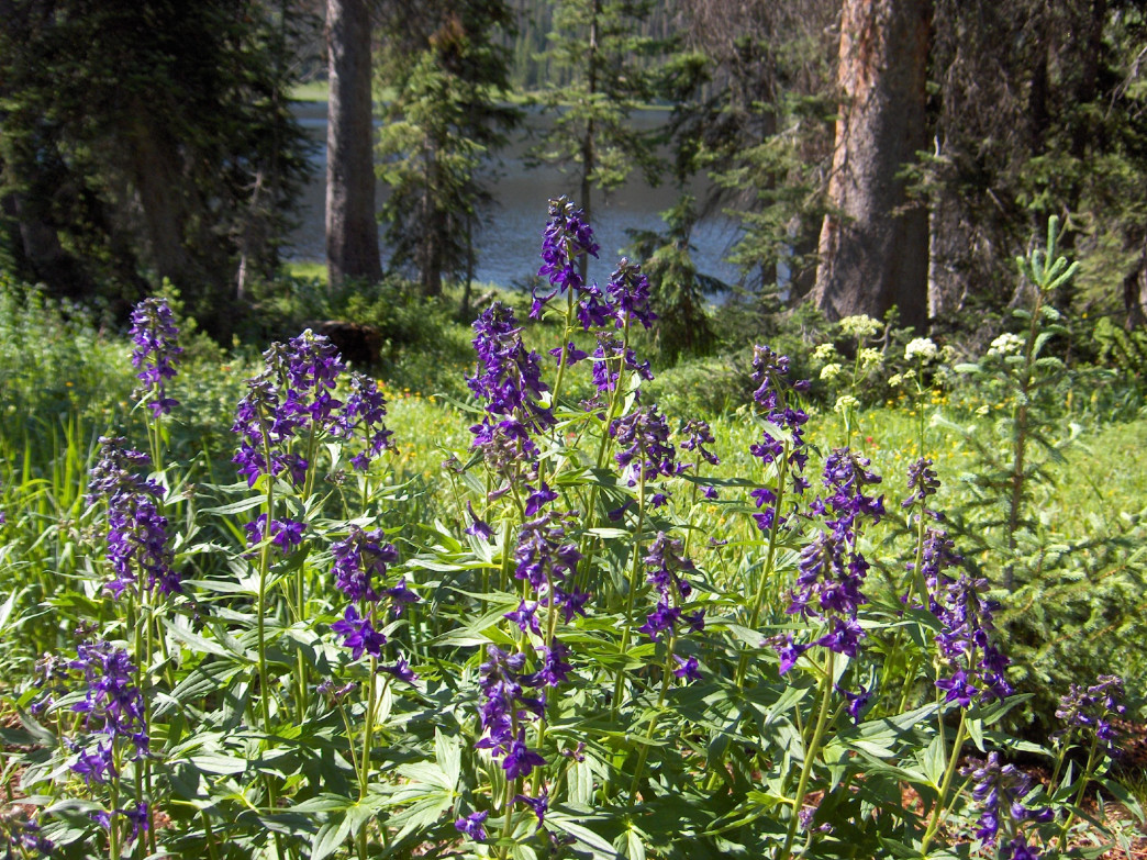 Relax amid the purple larkspur along the banks of Three Island Lake.