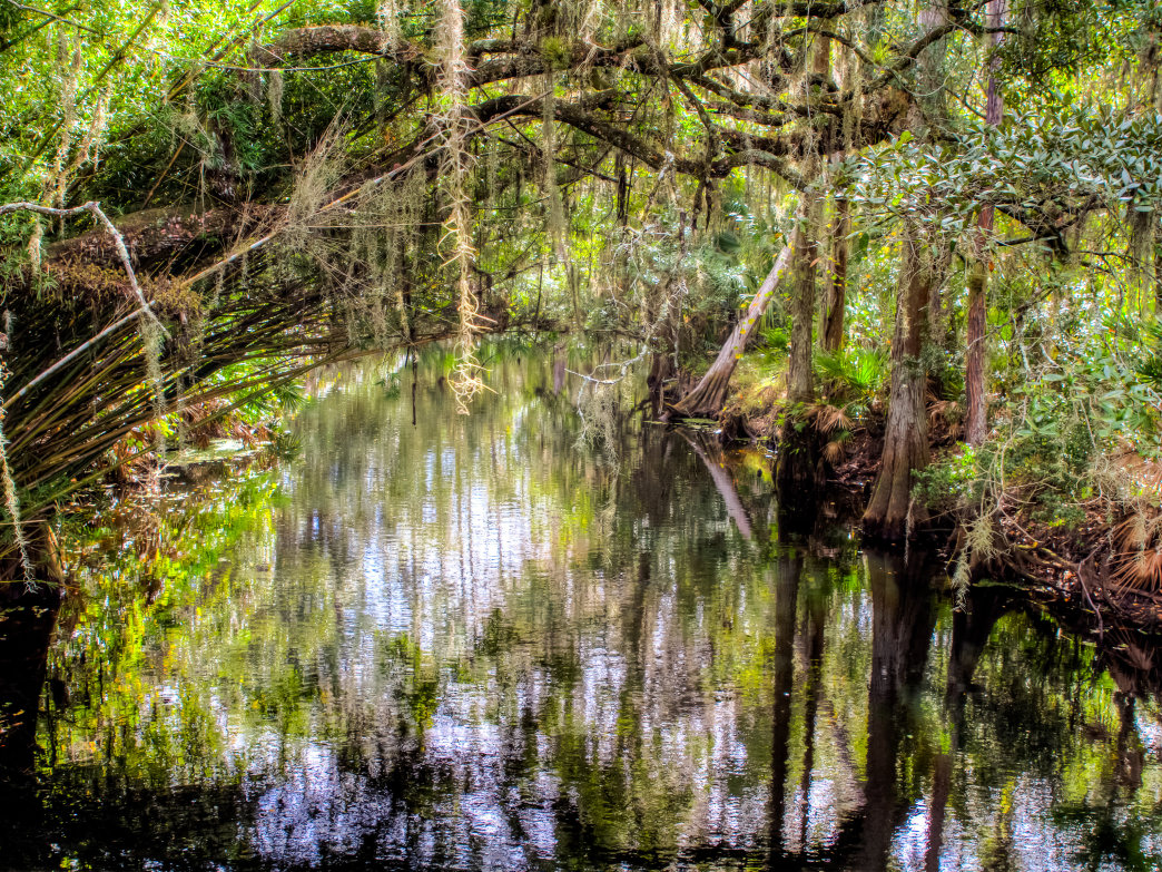 Shingle Creek is an excellent spot for paddling very close to Orlando.