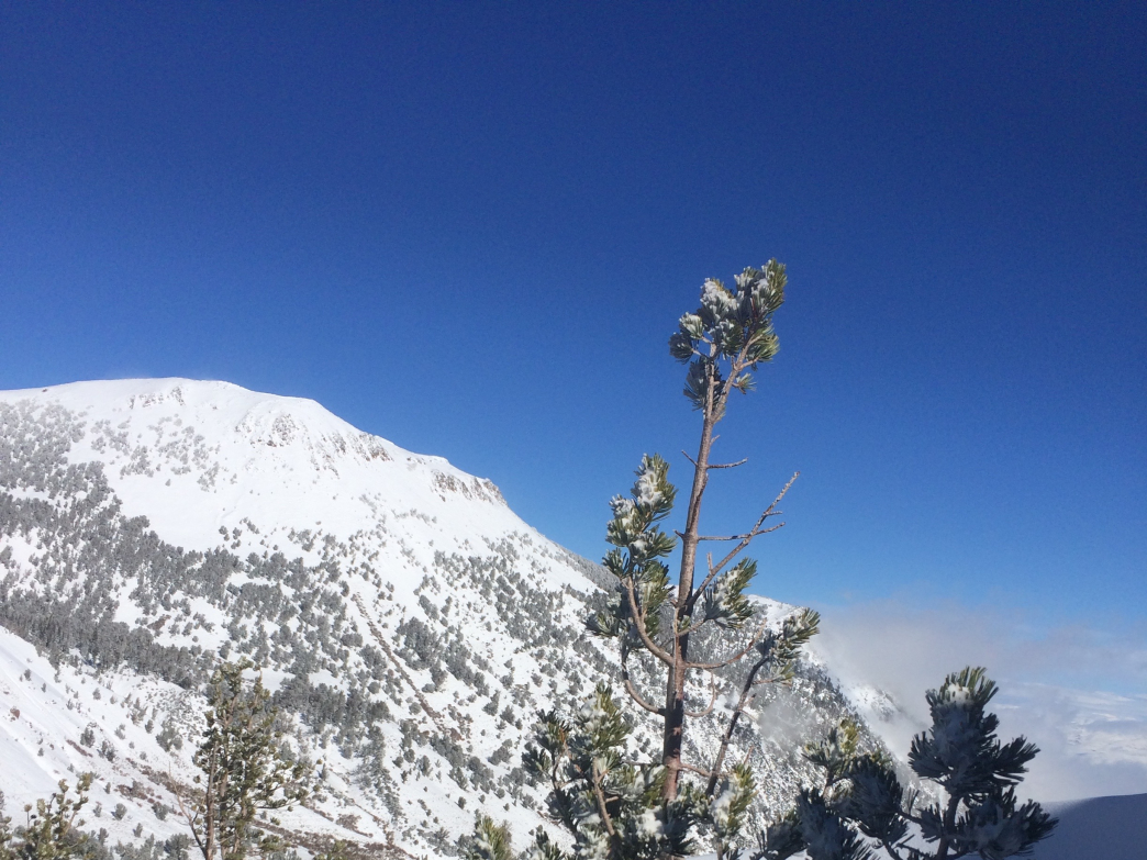 Glimpse of the wind swept summit of Mount Rose.