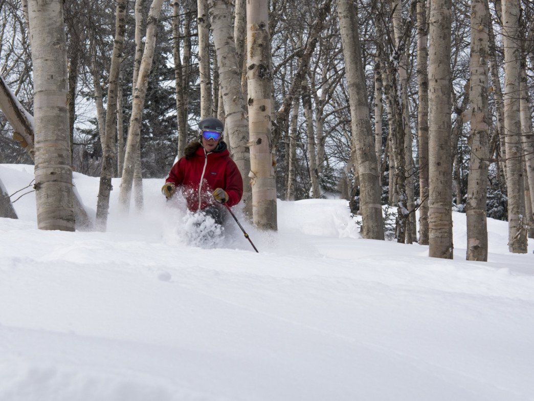 Head for the trees on a powder day at Mount Snow.