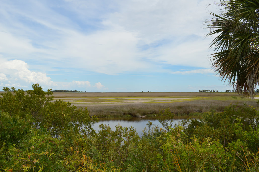 You'll spot plenty of native species at the scenic St. Mark's Wildlife Refuge.
