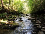 20170710_Short Springs State Natural Area_Hiking13