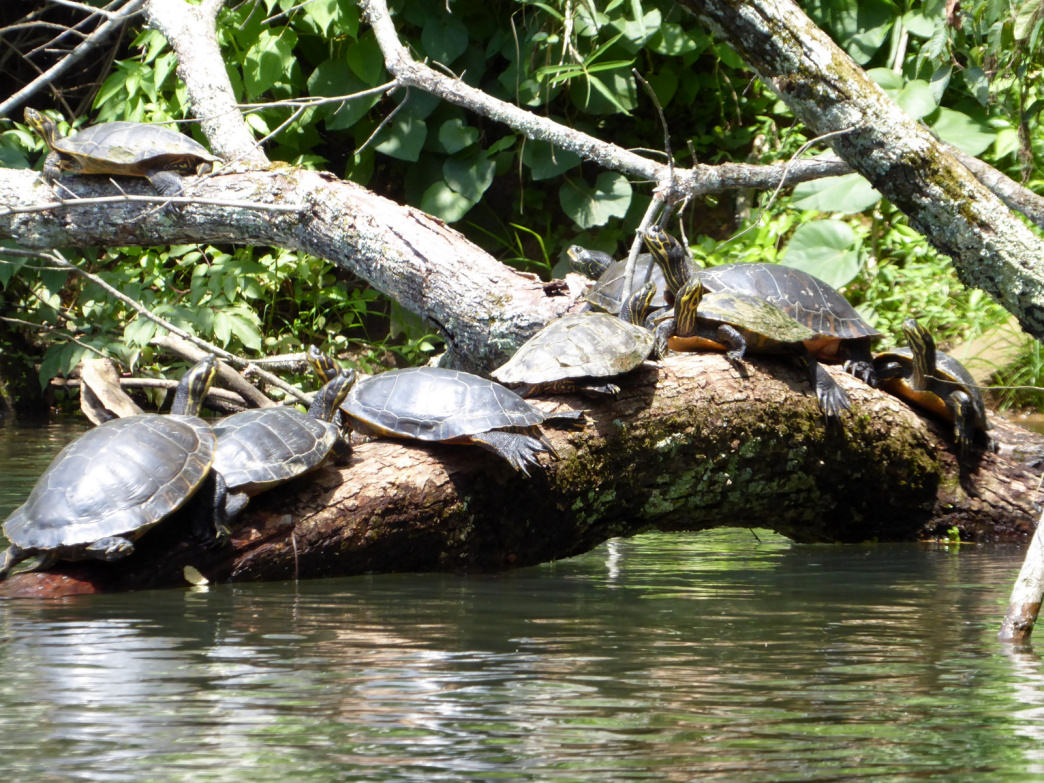 While the creek visits developed areas, it still hosts plenty of wildlife.