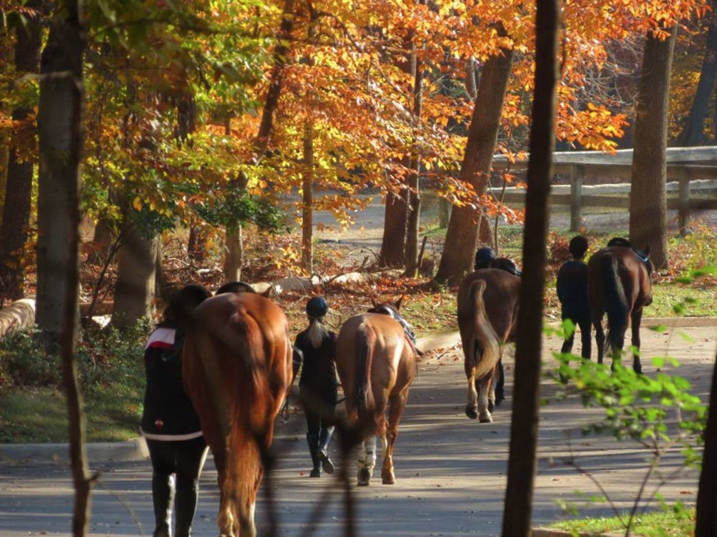 Horses on their morning walk in preparation for a day of riding near the Horse Center area in Rock Creek.