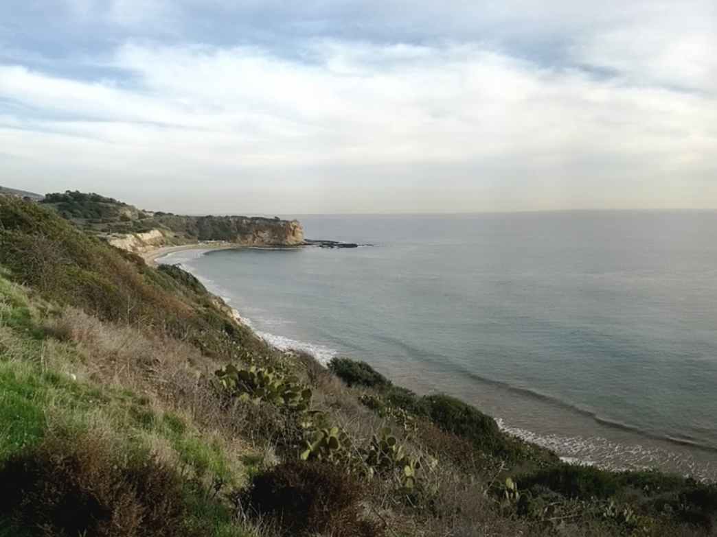 Abalone Cove Surfing