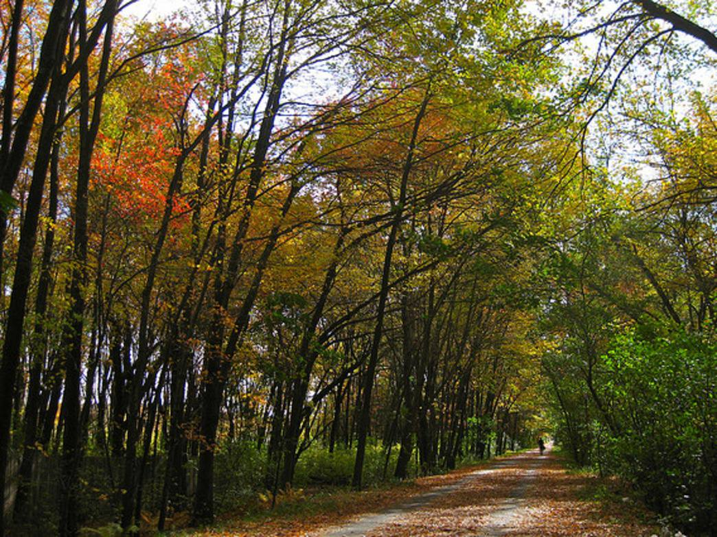A tunnel of fall colors greets riders on the the Minuteman Bike Path