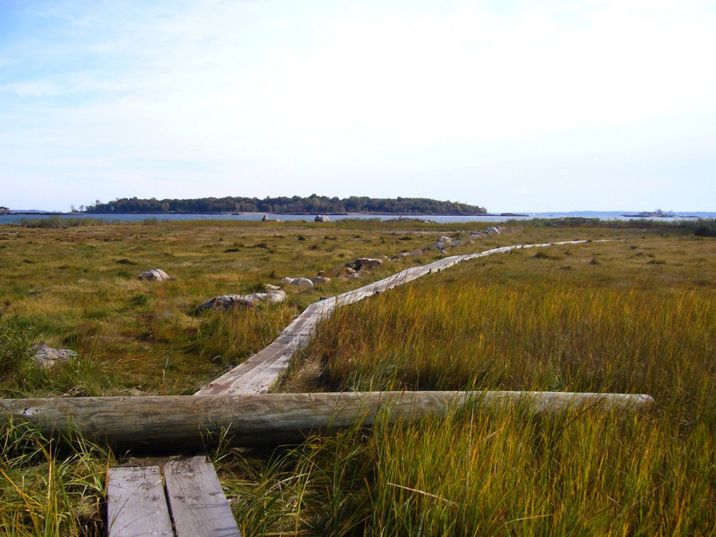 A typically surreal boardwalk at Pelham Bay Park