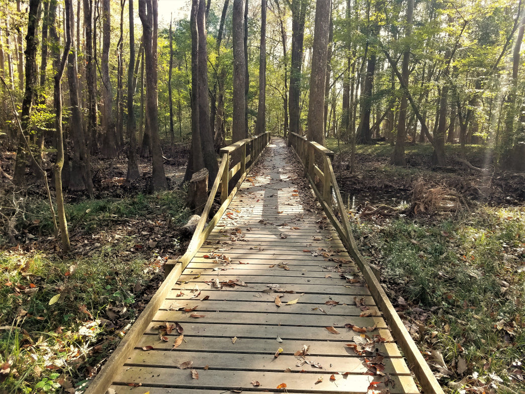 The Congaree boardwalk is an easy way to get in some exercise and see some of the biodiversity at the park.     Rob Glover