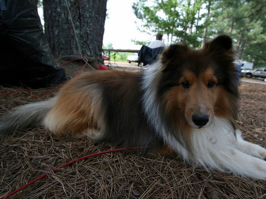 Relaxing in camp is even more fun with a canine companion.