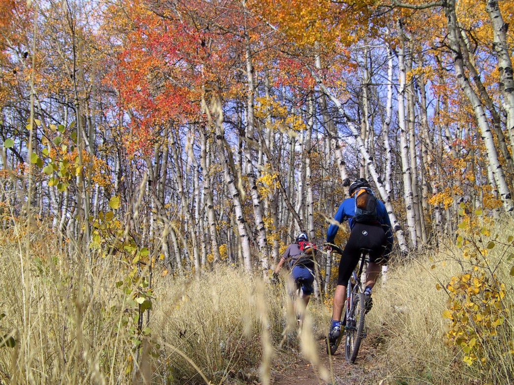 The Colorado Trail from the top of Kenosha Pass is a prime place to roll through aspen glades on two wheels.