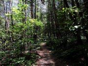 20170705_Cherokee National Forest - Clemmer Trail_Hiking9