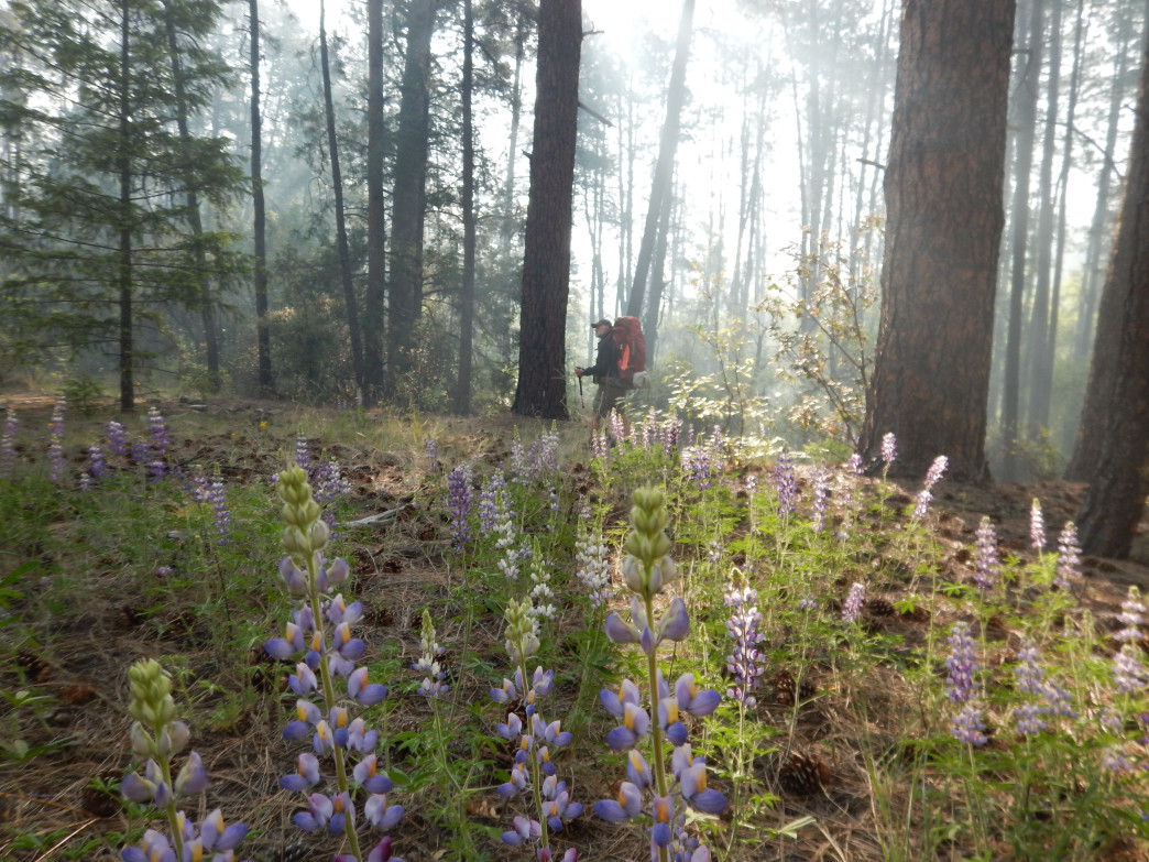 Lupine field encased in smoke in New Mexico's Gila Wilderness