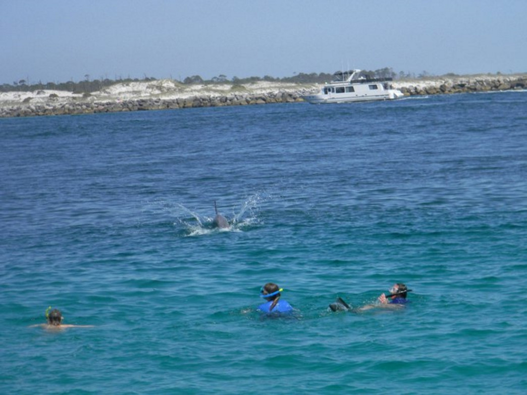 Snorkelers and a dolphin in front of the island.