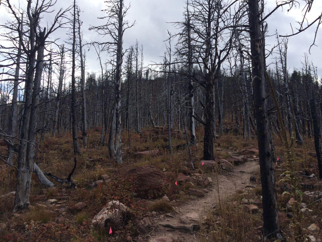 The burn zone from a 2012 fire resembles a moonscape.