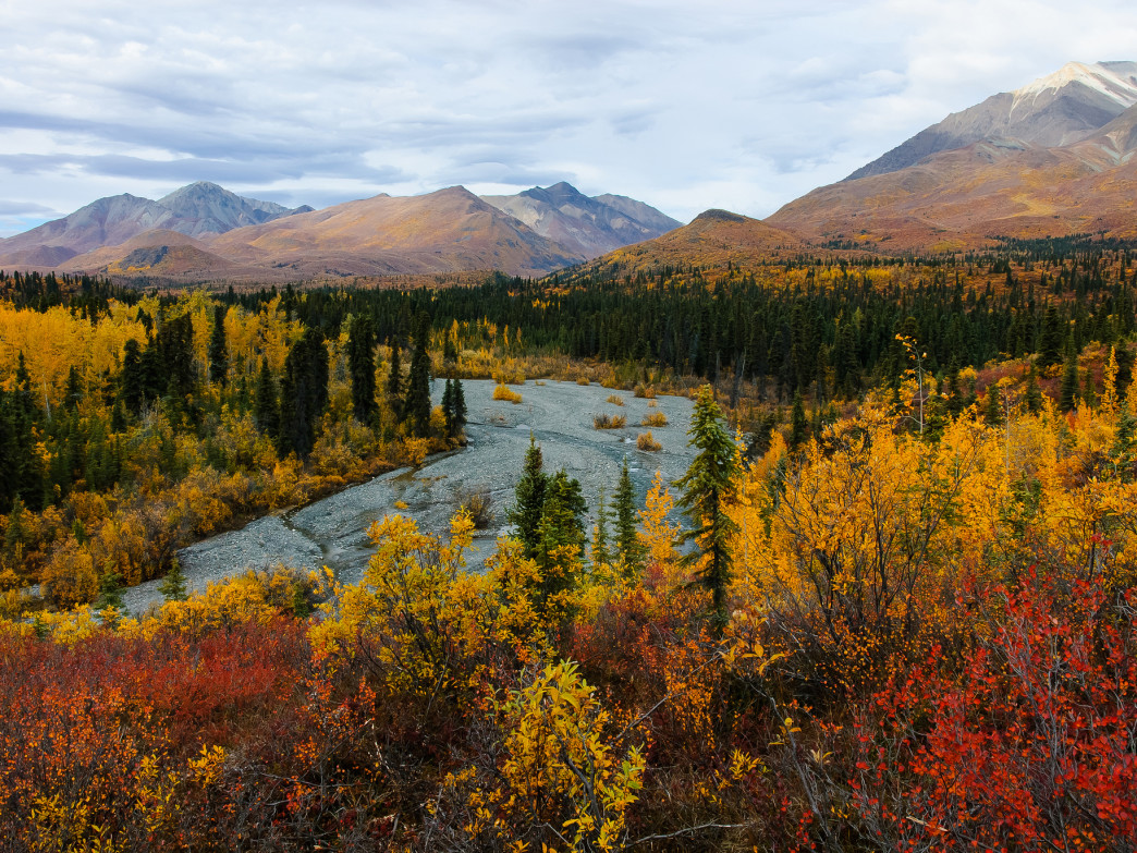 Autumn colors in Wrangell - St. Elias National Park.