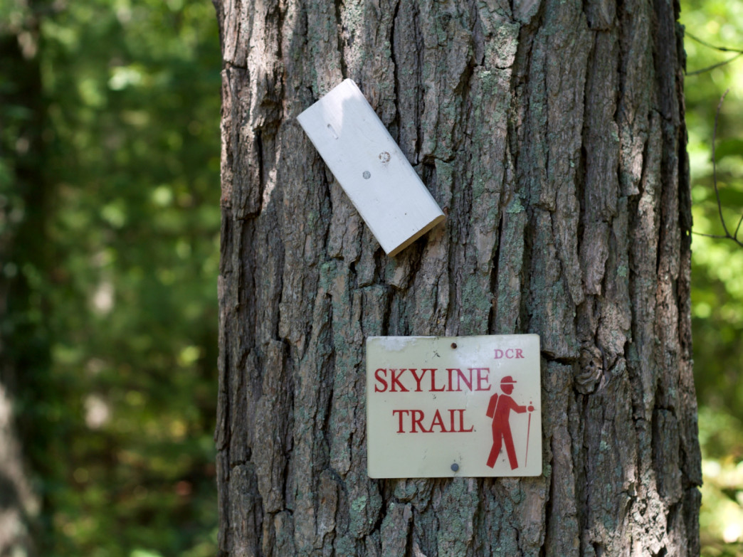 The trail markers along Skyline Trail appear clearly and often