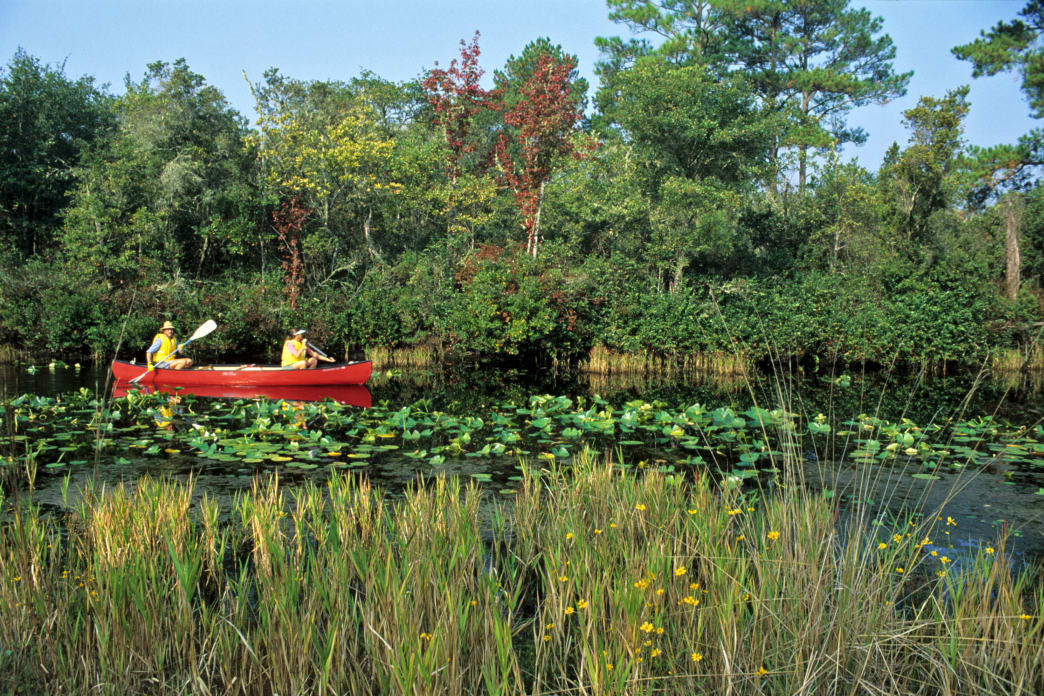 Stephen C. Foster State Park is located at one of the main entrances to the Okefenokee Swamp.
