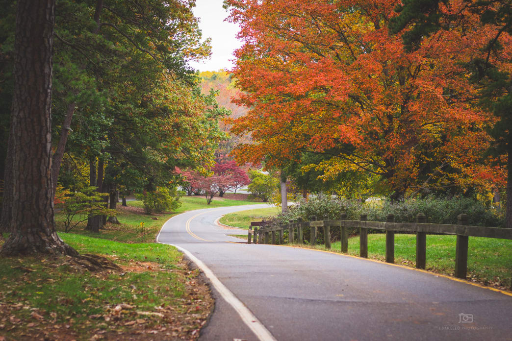 Enjoy some fall biking, hiking, fishing, and boating at Tanglewood Park. -Jonatan Barcelo