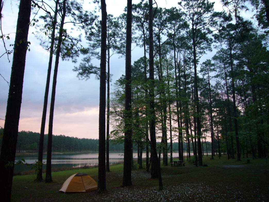 The Conecuh National Forest offers some spectacular settings for tent camping.