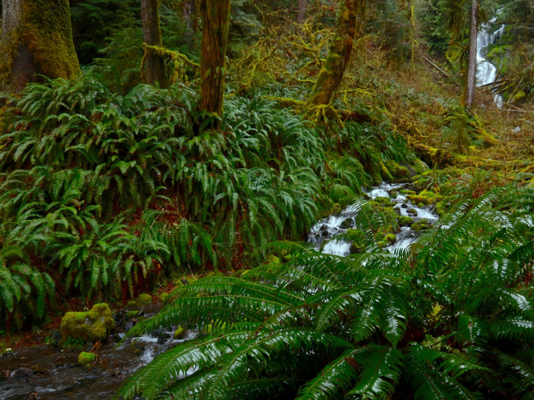 Mineral Creek Falls spilling down through the wet and wonderful Hoh Rainforest