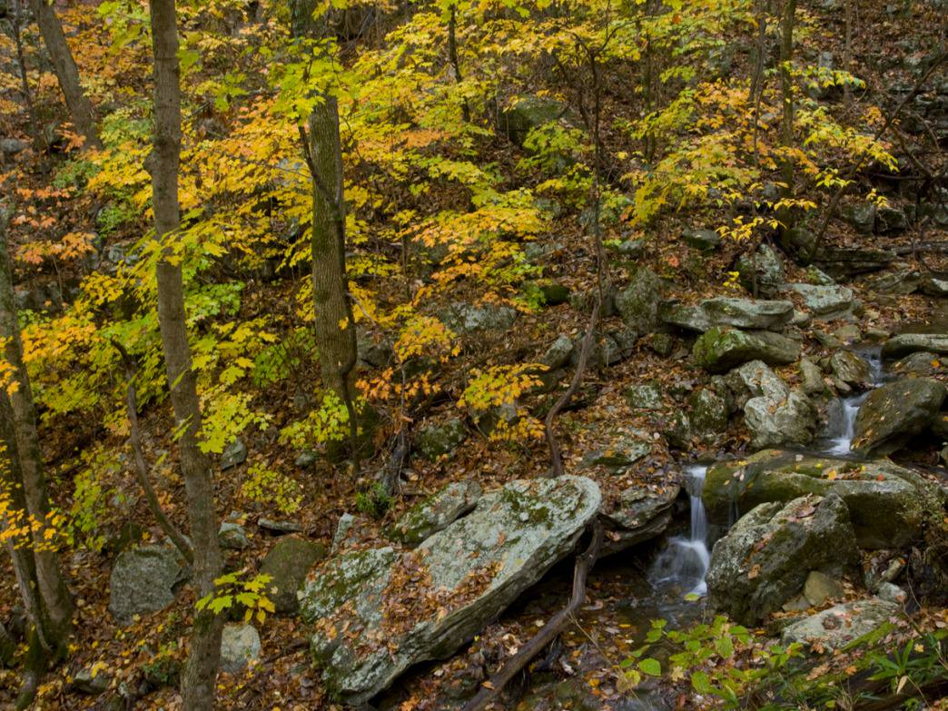 This mountainside stream is one of the many enjoyments of the Monte Sano Trails