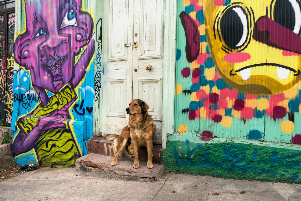 Valparaíso is full of free-range dogs that lounge in squares and play in packs until the wee hours of the morning.