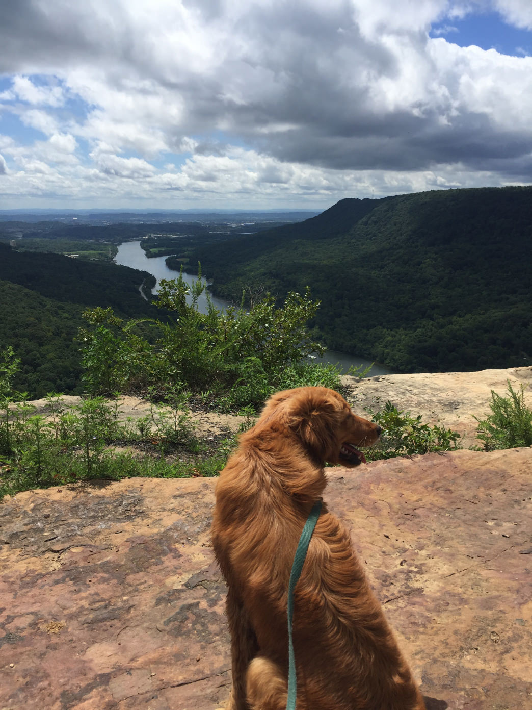 You can enjoy many of Chattanooga's best views with your dog.     Liz Fieser