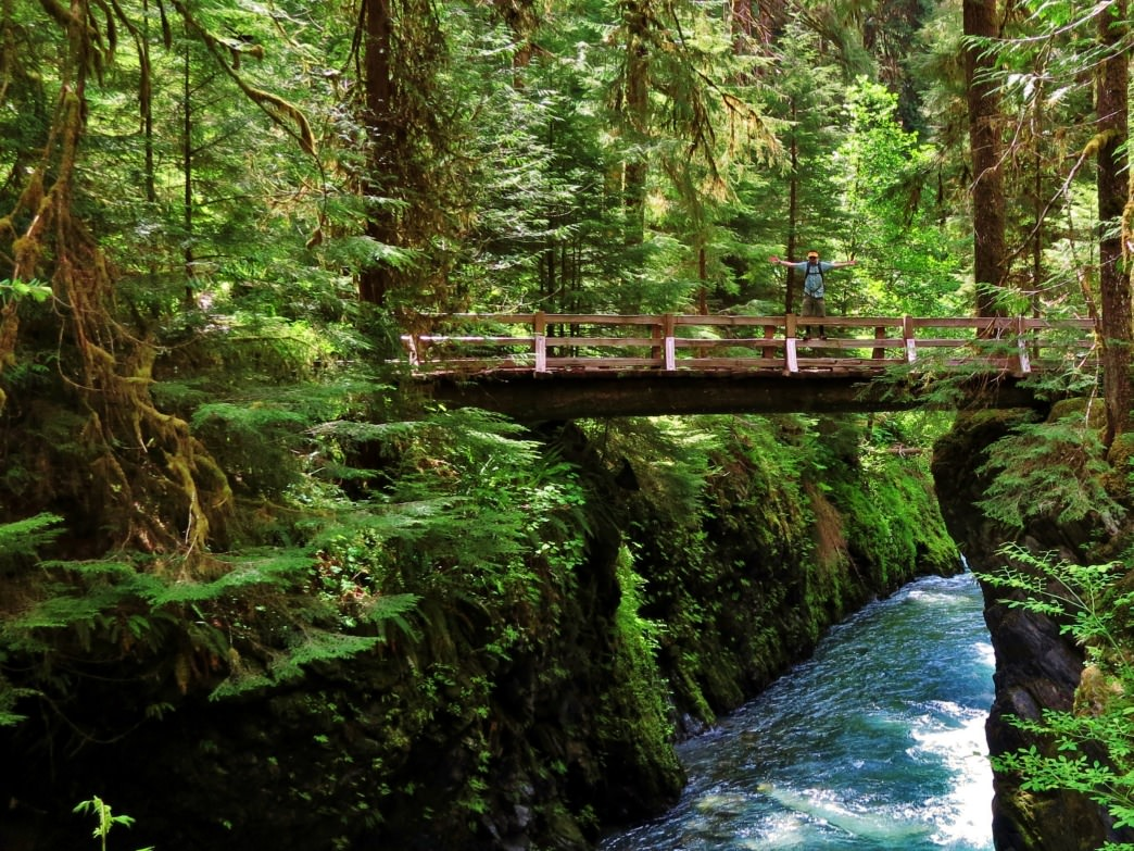 The Quinault Rainforest offers easy access to the stunning Enchanted Valley of Olympic National Park