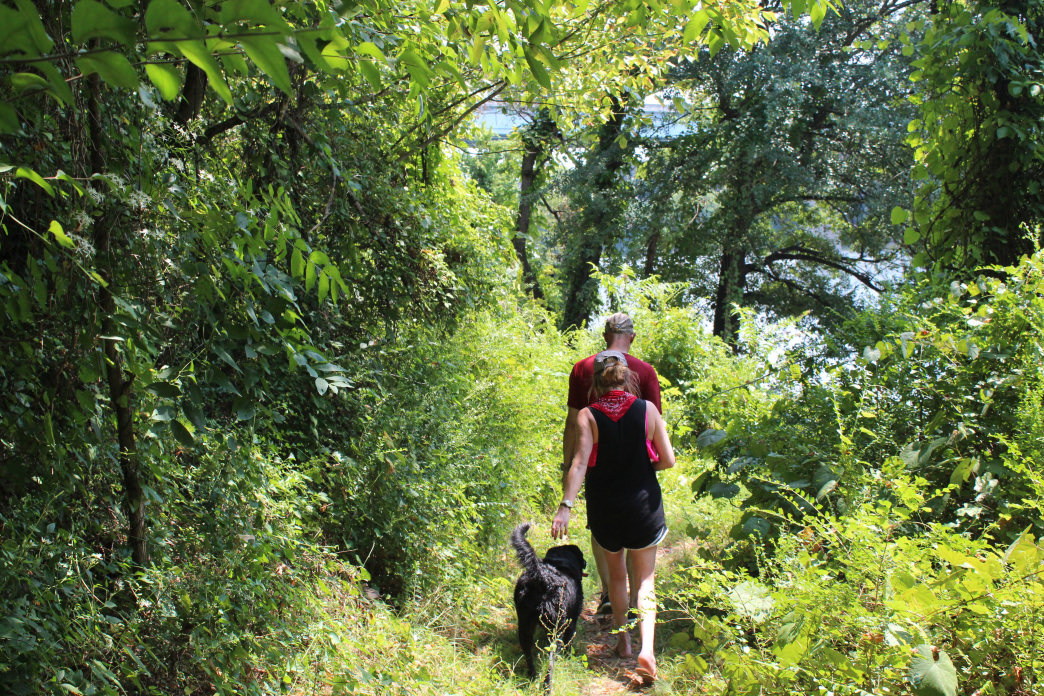 You'll find lots of dog-friendly trails in Chattanooga.     Evan Castellano