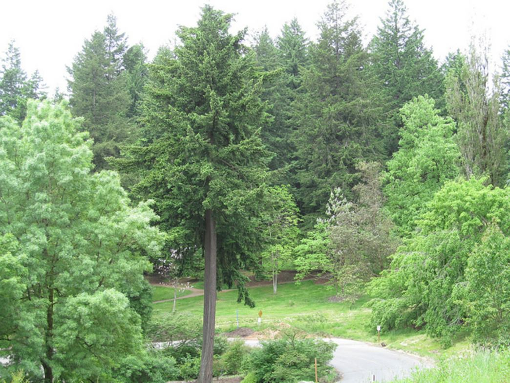 The Hoyt Arboretum is home to more than 1,000 species of tree and provides 12 miles of trail for runners and hikers alike.