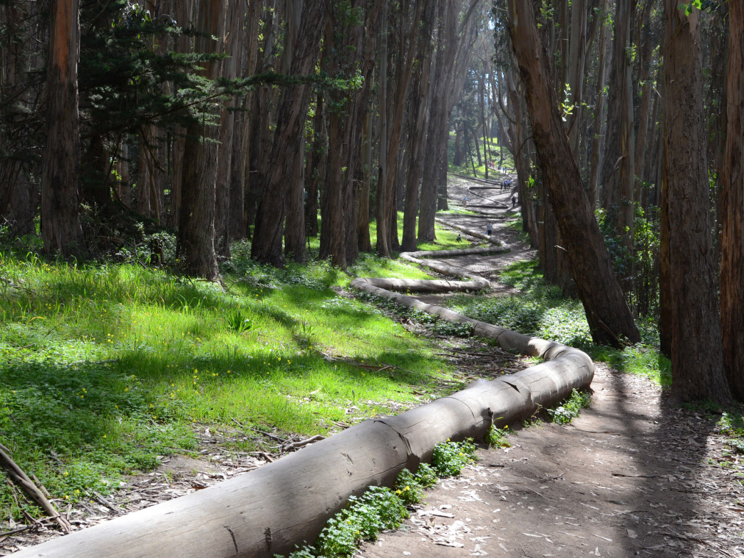 Andy Goldsworty's sculpture Wood Line makes for an artsy hike through the Presidio.