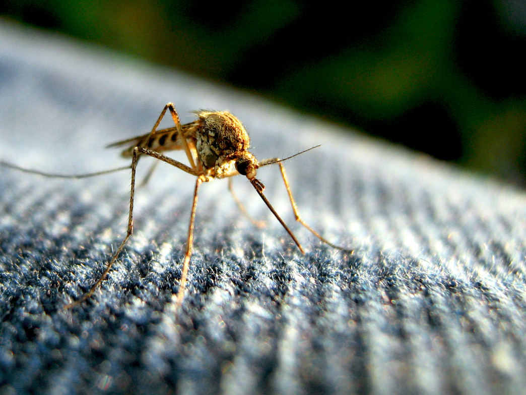 Wearing long pants and long sleeves can help prevent mosquito bites.