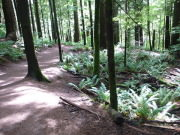 Image for Olallie State Park - Hiking