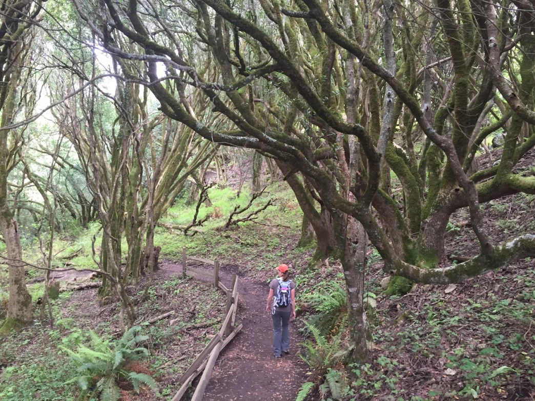 After descending dozens of steps, the last mile and half of the trail is a delight.