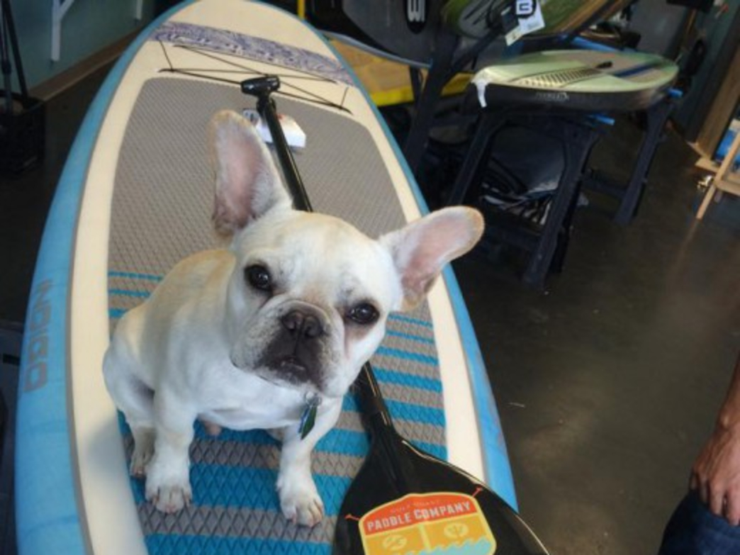 Cap is always ready to give paddleboarding a go and to cheer on anyone who drops in.