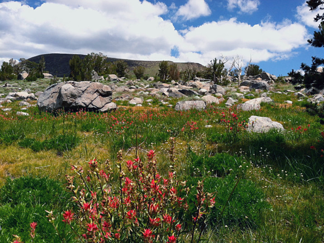 The high alpine terrain surrounding Lake Winnemucca is dotted by wildflowers.