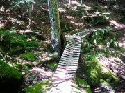 Image for Millstone Trails
