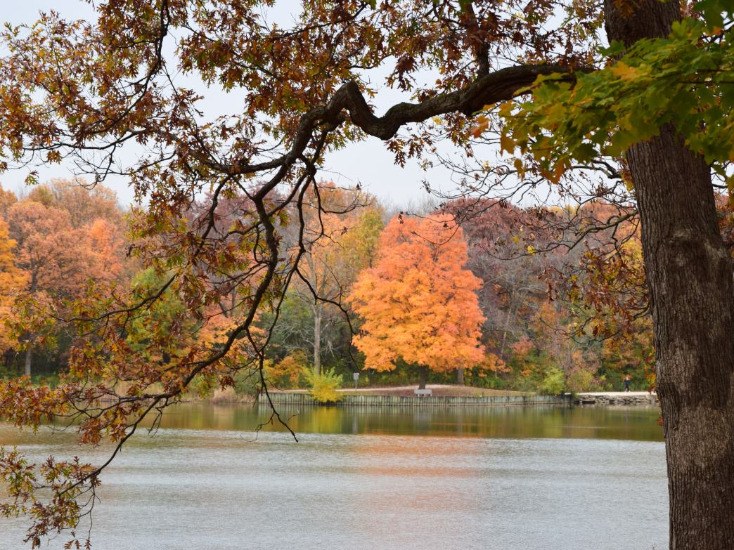 Fall is the perfect time to explore the trail system at Herrick Lake Forest Preserve.