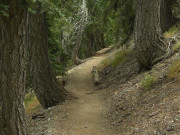 Image for Silver Moccasin Trail