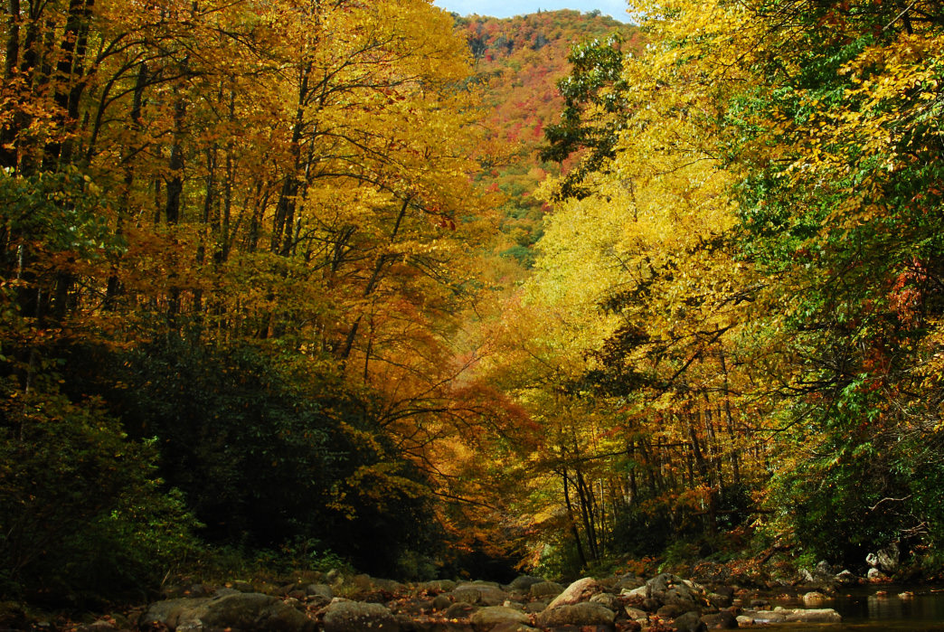 Fall foliage in the Shining Rock Wilderness. Kent Peggram