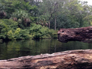 Image for Lower Wekiva River - Katie Landing
