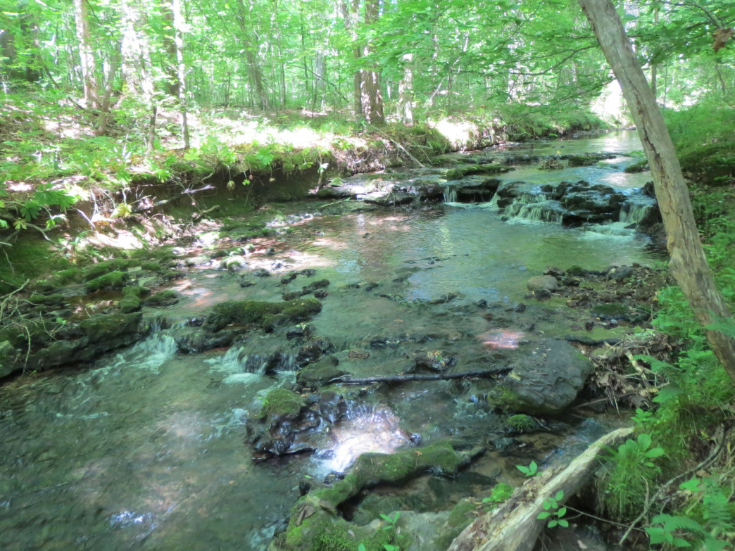 The greens of spring reflect in this tiered stream at the Shoal Creek Preserve.