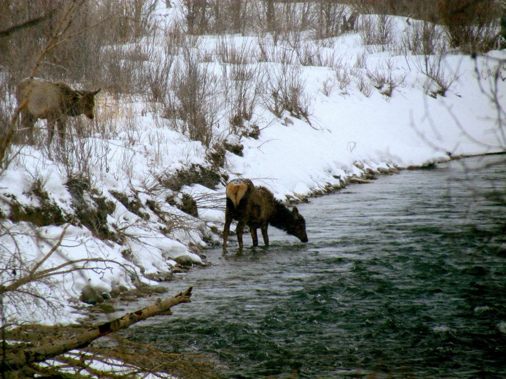 Keep an eye out for wildlife as you explore Grand Teton National Park.