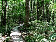 20170612_Tennessee_Chattanooga_Red Clay State Park_Hiking9